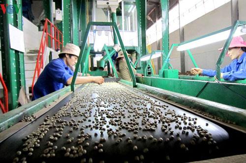 Đăk Lăk dành 42 tỷ đồng hỗ trợ lãi suất cho doanh nghiệp đầu tư vào nông nghiệp