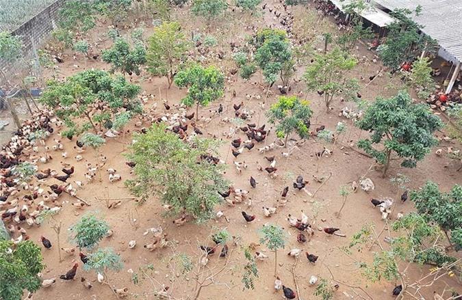Khởi nghiệp 20 con gà mái, nghèo nhất làng lên đời nhà lầu xe hơi