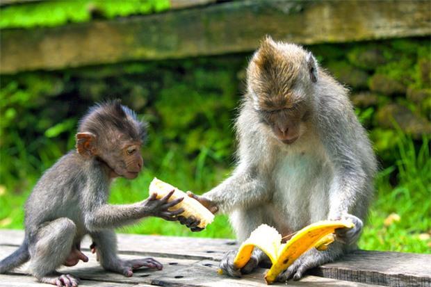 8 sự thật chứng minh các loài vật có thể giống con người đến mức đáng kinh ngạc, thậm chí còn giàu cảm xúc hơn chính chúng ta - Ảnh 9.