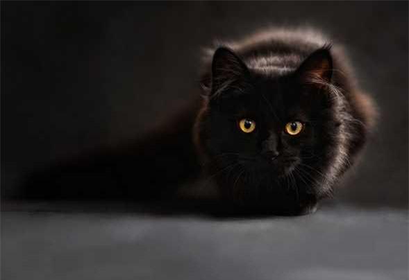 Kiêng cho mèo đen vào nhà trong ngày này