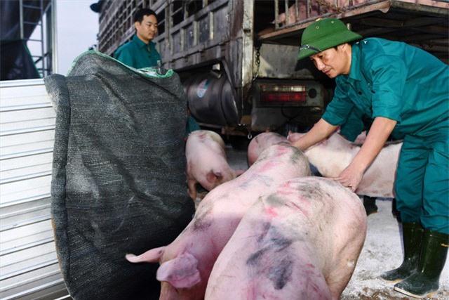 Cần Thơ: Mở hàng chục điểm bán thịt lợn bình ổn, thấp hơn giá thị trường - Ảnh 1.