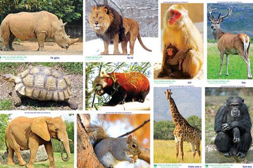 Thủ tướng chỉ thị dừng nhập khẩu động vật hoang dã. Ảnh minh họa.
