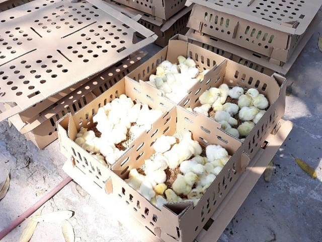 HTX đã áp dụng kỹ thuật chăn nuôi an toàn VietGAP, nhằm nâng cao thu nhập cho thành viên