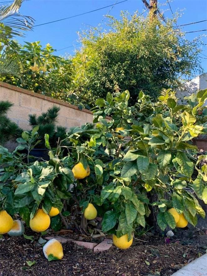 vườn nhà Bằng Kiều 10