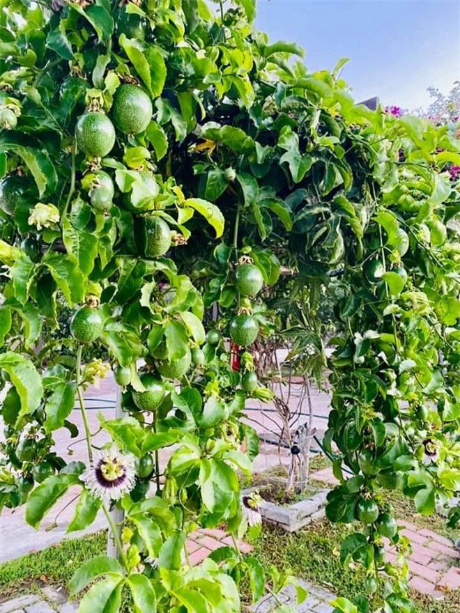 vườn nhà Bằng Kiều 5