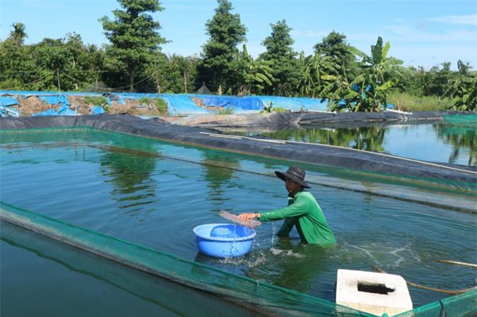 Cơ ngơi nuôi cá chạch lấu của anh Trần Thanh Hùng. Ảnh: Thành Hiệp.