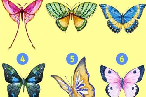 Bạn chọn cánh bướm nào?