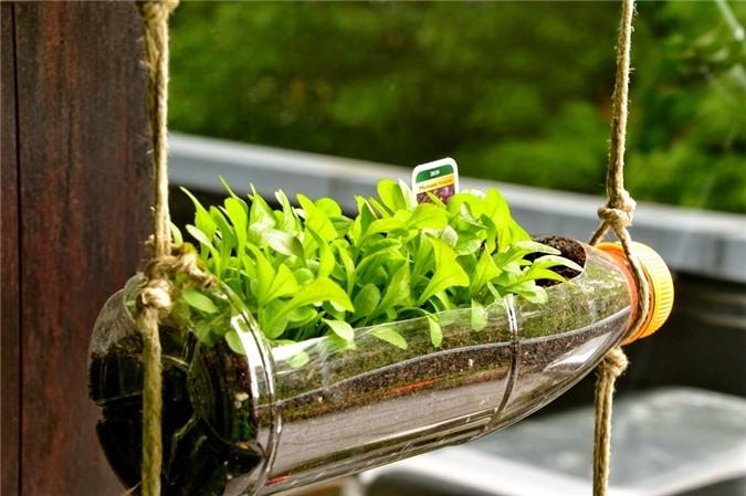 Không chỉ là một giải pháp tận dụng chai nhựa bỏ đi, cung cấp thực phẩm an toàn cho gia đình, những góc vườn từ chai nhựa cũng góp phần tạo nên vẻ đẹp cho ngôi nhà của bạn.