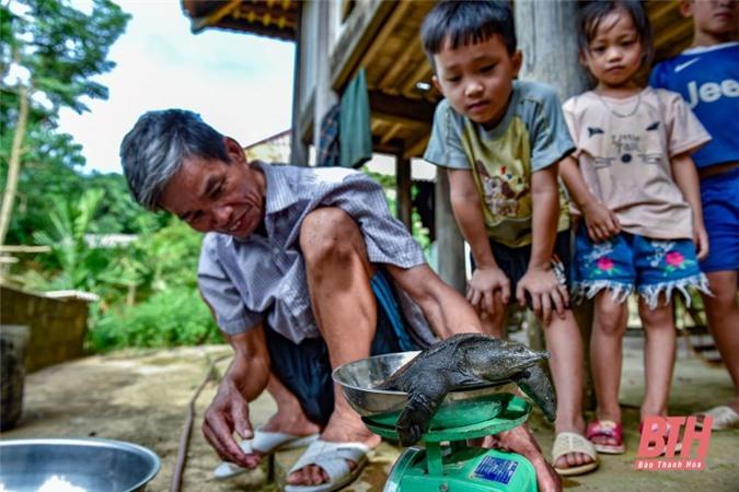 Cựu chiến binh làm giàu từ mô hình nuôi ba ba trong bể xi măng