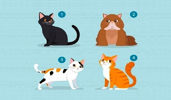 Bạn chọn chú mèo nào?