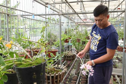 Vườn lan đột biến của anh Nguyễn Văn Minh ở Tổ dân phố Sơn Thanh, thị trấn Đại Đình (Tam Đảo) được giới chơi lan định giá hàng tỷ đồng.Ảnh: Nguyễn Lượng