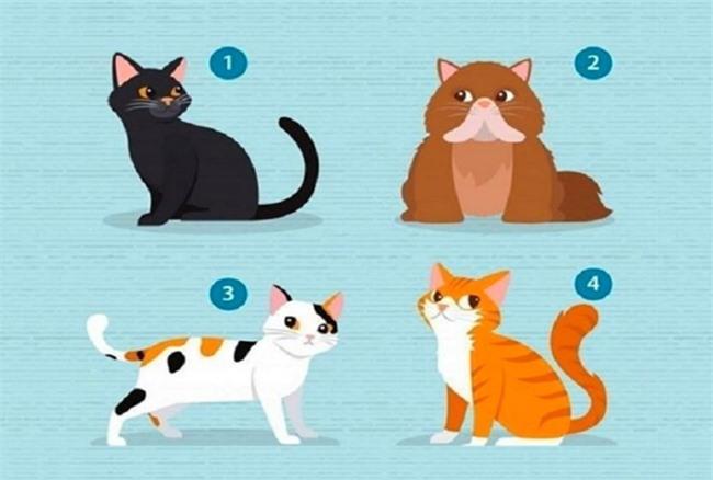 Chọn mèo để biết điều bạn cần từ nửa kia