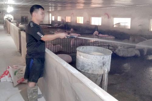 Vĩnh Phúc: Làm giàu từ mô hình trang trại chăn nuôi lợn