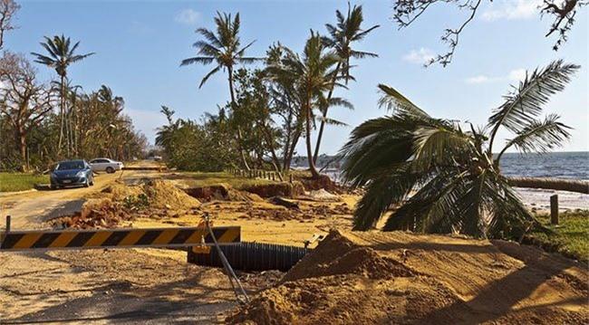 Cây đổ bên đường ven biển Mission, phía bắc Queensland sau cơn bão Yasi.