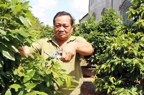Bến Tre: Làm giàu từ chăn nuôi, trồng mai vàng
