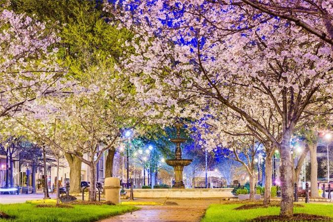 Ban đêm, hoa càng trở nên rực rỡ và huyền ảo dưới ánh đèn.