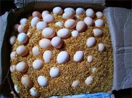 Mẹo bảo quản trứng tươi lâu, tránh ung thối ngay cả khi nhà bạn không có tủ lạnh - Ảnh 3