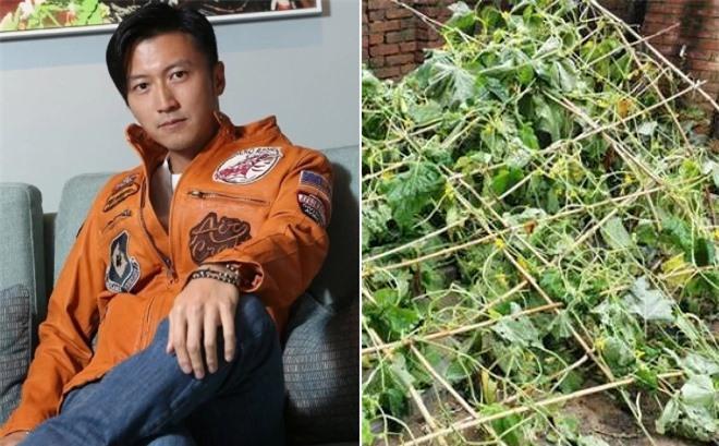 Tạ Đình Phong chỉ đề cập đến vườn rau đổ trên trang cá nhân.
