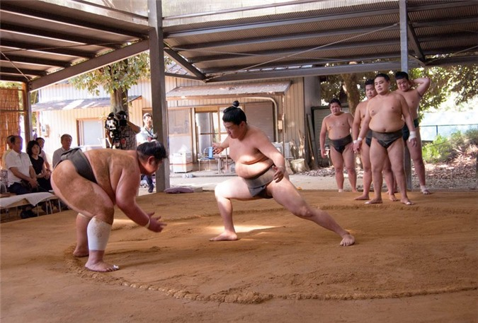 Bí quyết để các đô vật sumo không mắc các triệu chứng béo phì - ảnh 1
