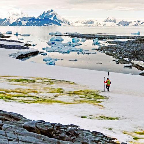 Bề mặt tuyến tan tại Nam Cực đang xuất hiện ngày càng nhiều loài tảo xanh. Ảnh: Đại học Cambridge.