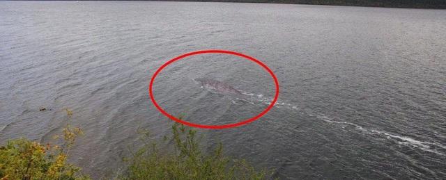 Hình ảnh được cho là của quái vật hồ Loch Ness.