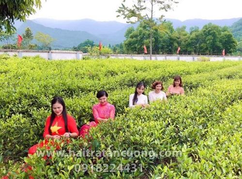 Địa chỉ mua trà Thái Nguyên uy tín giá tốt – Hải Trà Tân Cương