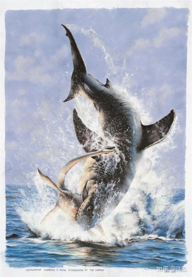 Cretoxyrhina: Loài cá mập thời tiền sử còn đáng sợ hơn cả Megalodon - Ảnh 13.