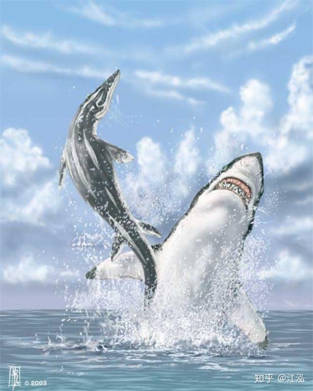 Cretoxyrhina: Loài cá mập thời tiền sử còn đáng sợ hơn cả Megalodon - Ảnh 9.