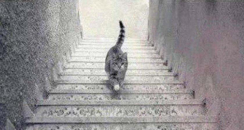 Con mèo đi lên hay đi xuống?