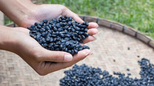 Đậu đen xanh lòng có giá trị dinh dưỡng cao, là một thực phẩm rất tốt cho sức khỏe - Ảnh minh họa: Internet