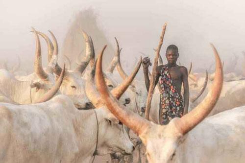 Một thành viên bộ tộc Mundari bên cạnh đàn bò.