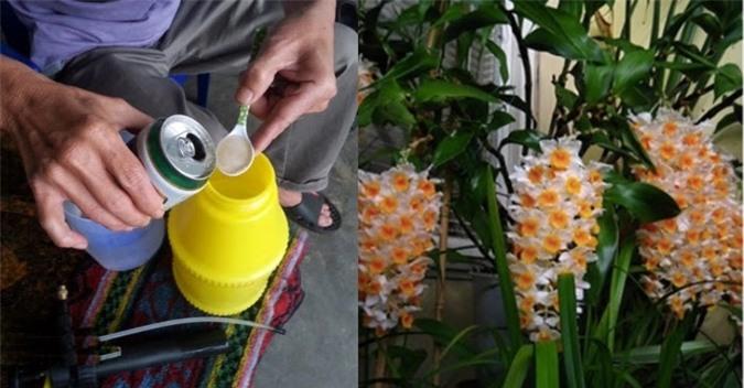 Dùng bia tưới hoa giúp hoa tươi lâu