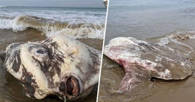 Bí ẩn sinh vật dài 4,5 mét nằm trên bờ biển Anh - Ảnh 2.