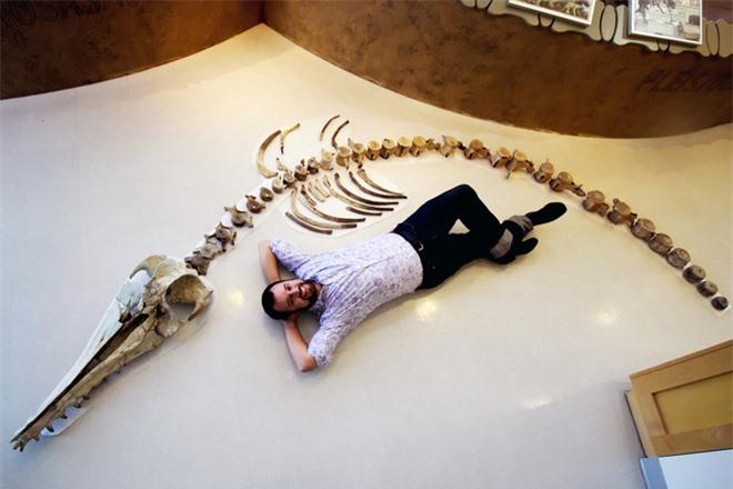 Loài cá heo ăn thịt siêu lớn này từng là nỗi kinh hoàng một thời của các đại dương trên Trái đất - Ảnh 1.