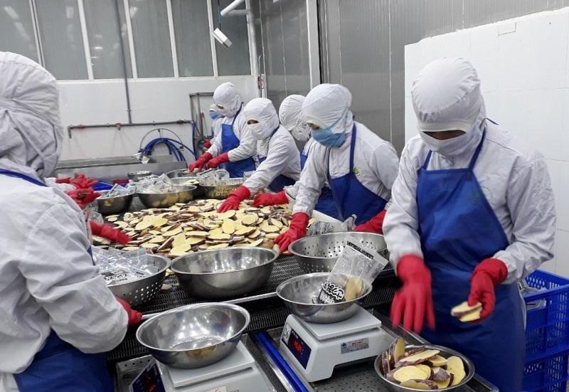 Nhiều doanh nghiệp sản xuất, kinh doanh, xuất nhập khẩu trên địa bàn tỉnh Lâm Đồng đang gặp khó khăn do ảnh hưởng của dịch Covid-19.