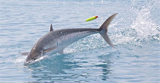 Hi hữu: Cá thu 18kg vọt khỏi mặt nước húc chết thợ câu - Ảnh 1.