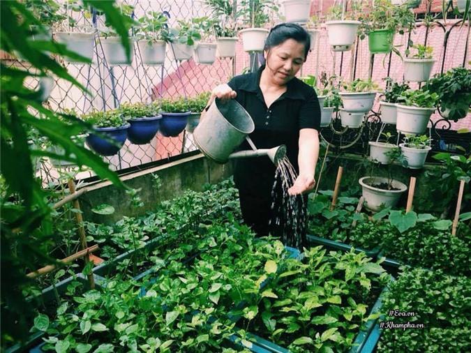 """Cô giáo Hà Nội mách cách làm """"nước thần"""" diệt sâu bọ, đuổi muỗi, lau nhà,... cực tốt - 1"""