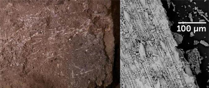 Phát hiện chốn chăn gối xưa nhất thế giới, đầy sinh vật tuyệt chủng bao vây - Ảnh 3.