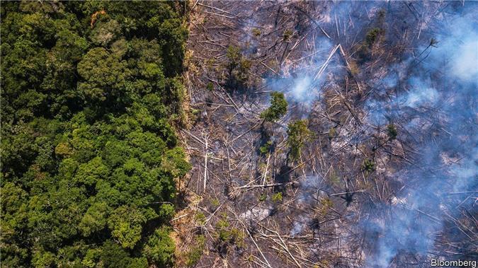 Rừng Amazon đang bị chặt phá với tốc độ đáng báo động. Ảnh:  Bloomberg