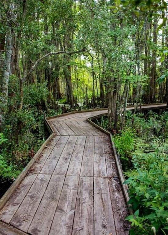Con đường dẫn lên khu nghỉ dưỡng hiểm trở khó đi. Chi Bảo đang nghiên cứu giải pháp xây dựng những bậc thang hoặc tạo ra con đường bằng gỗ dẫn lên resort.
