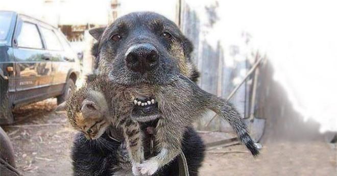 Căn nhà cháy rực, chú chó lao vào biển lửa làm một điều khiến ai cũng xúc động - Ảnh 2.