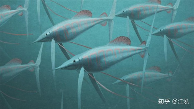 Phát hiện loài cá kiếm cổ đại với hàm răng sắc nhọn ngoại cỡ - Ảnh 11.