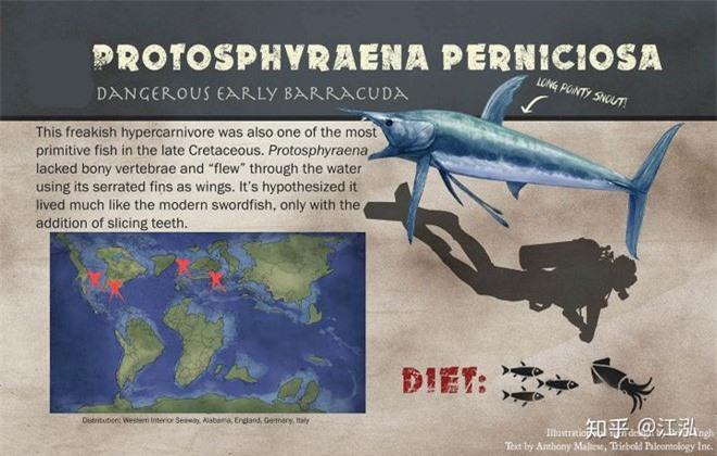 Phát hiện loài cá kiếm cổ đại với hàm răng sắc nhọn ngoại cỡ - Ảnh 12.
