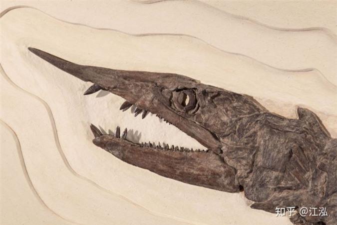 Phát hiện loài cá kiếm cổ đại với hàm răng sắc nhọn ngoại cỡ - Ảnh 9.