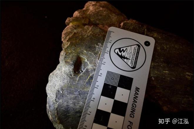 Những mẫu hóa thạch mới tiết lộ loài khủng long Allosaurus không chỉ khát máu mà chúng còn ăn thịt cả đồng loại - Ảnh 9.