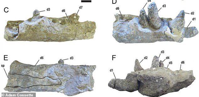 Quái vật tiền sử xơi tái khủng long bằng chiếc răng to như... quả chuối - ảnh 1