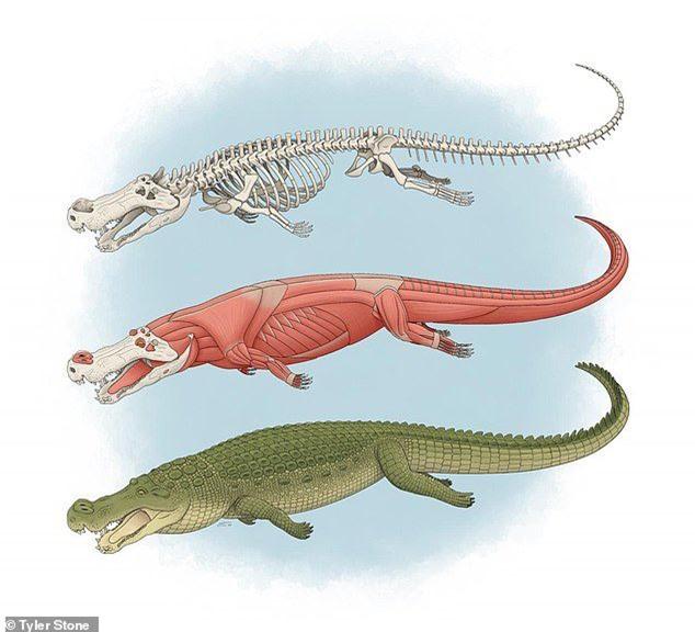 Quái vật tiền sử xơi tái khủng long bằng chiếc răng to như... quả chuối - ảnh 4