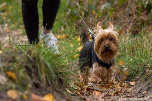 Quy định buộc người dân dắt chó đi dạo 2 lần mỗi ngày tại Đức. Ảnh: DW.