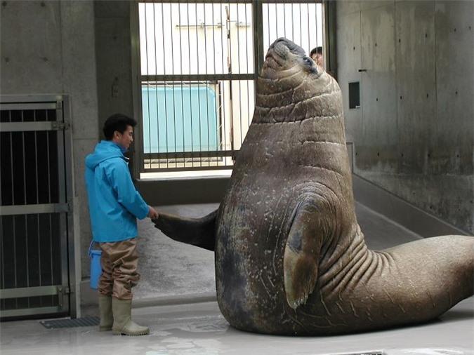 10 khoảnh khắc cho thấy con người bé nhỏ đến thế nào trước động vật hoang dã - Ảnh 7.