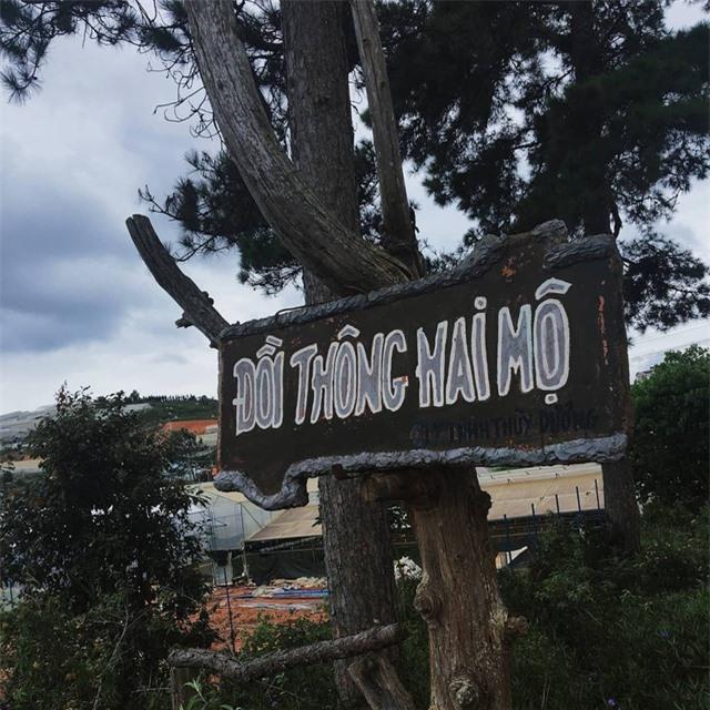 Đây là một khu đồi thông thoai thoải với một ngôi mộ đôi nằm ở dưới chân đồi. Ảnh: @kimdung.1610